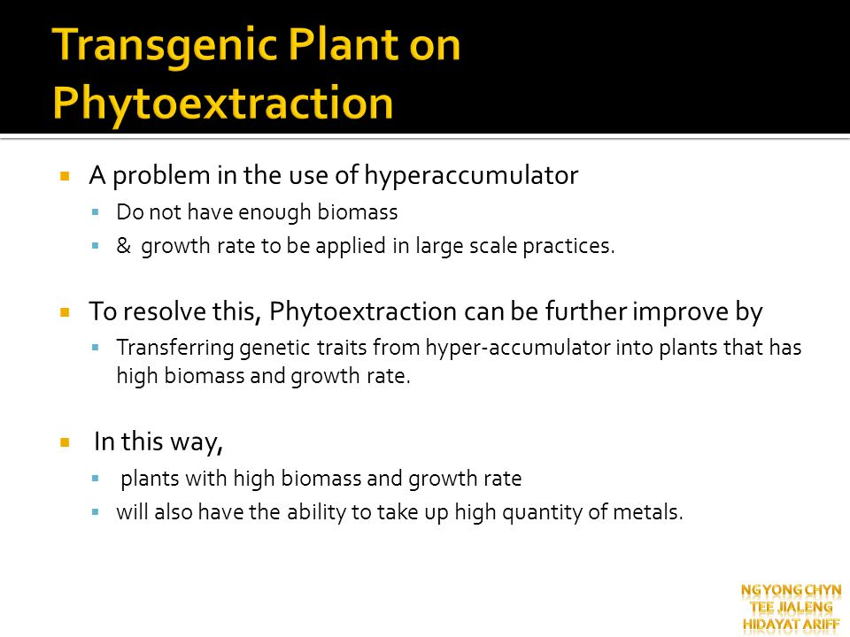 Transgenic Plant on Phytoextraction