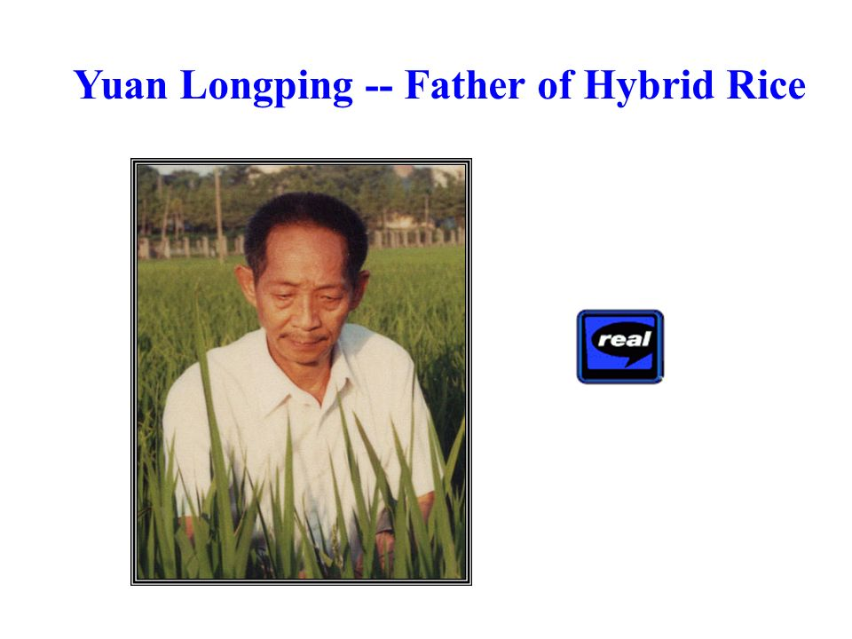 Yuan Longping -- Father of Hybrid Rice