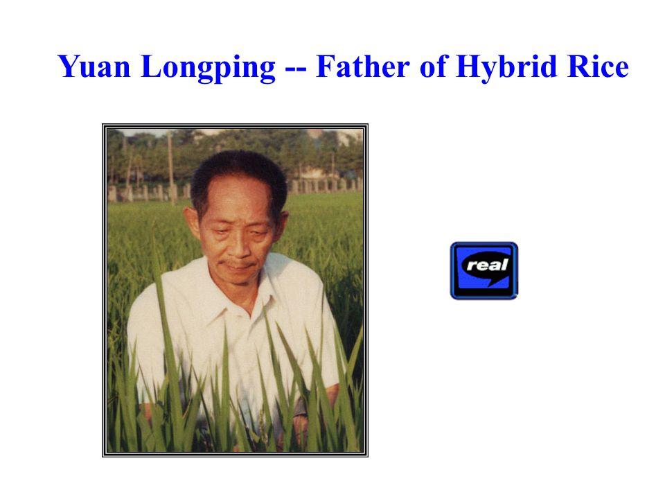 Yuan Longping -- Father of Hybrid Rice
