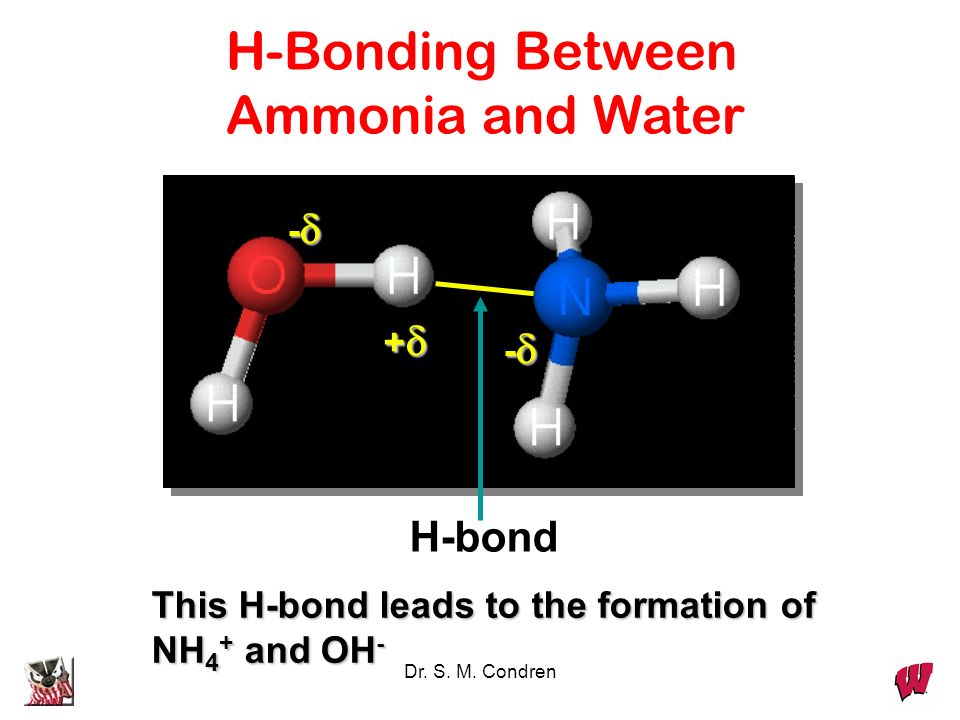 H-Bonding Between Ammonia and Water H-bond - + -