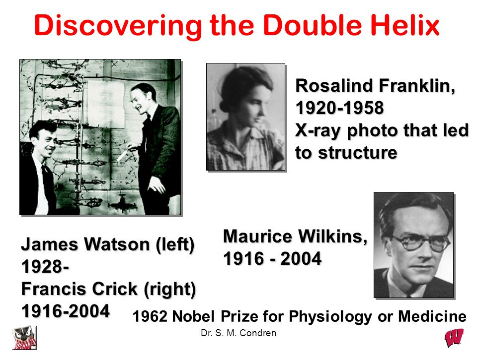 Discovering the Double Helix