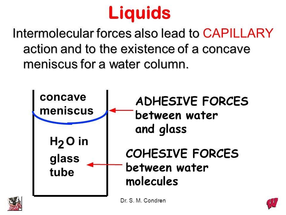 Liquids Intermolecular forces also lead to CAPILLARY action and to the existence of a concave meniscus for a water column.