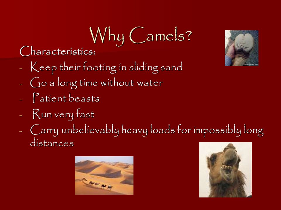 Why Camels Characteristics: Keep their footing in sliding sand