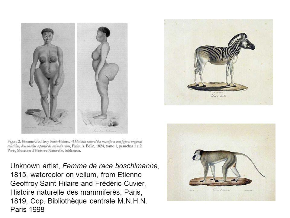 Unknown artist, Femme de race boschimanne, 1815, watercolor on vellum, from Etienne Geoffroy Saint Hilaire and Frédéric Cuvier, Histoire naturelle des mammiferès, Paris, 1819, Cop.