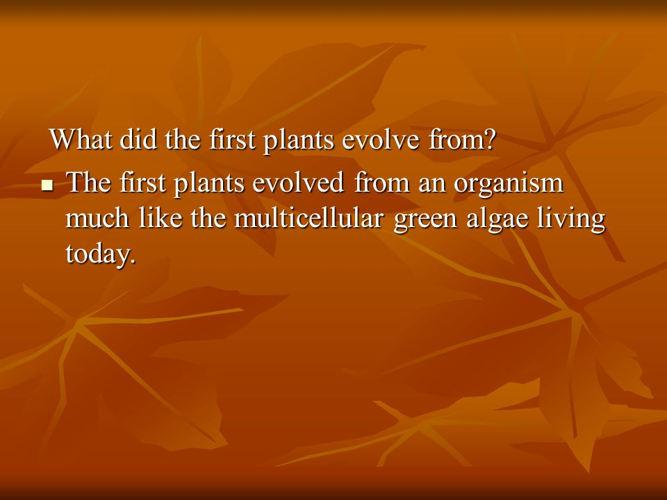 What did the first plants evolve from