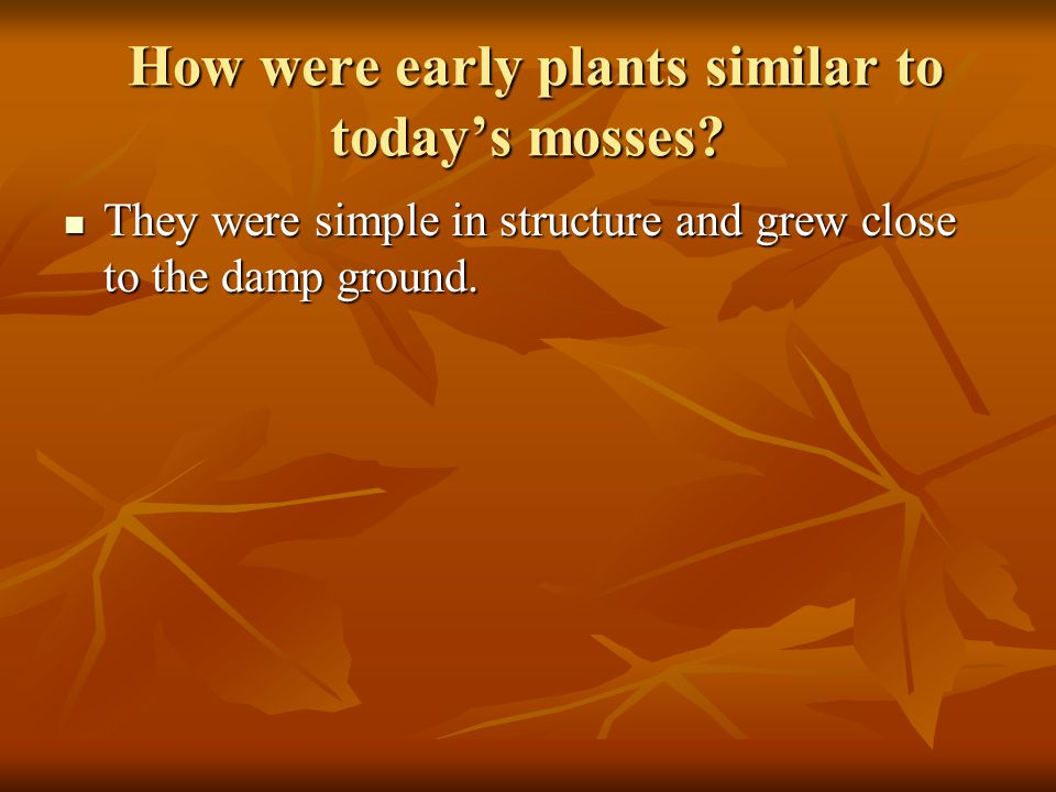 How were early plants similar to today's mosses