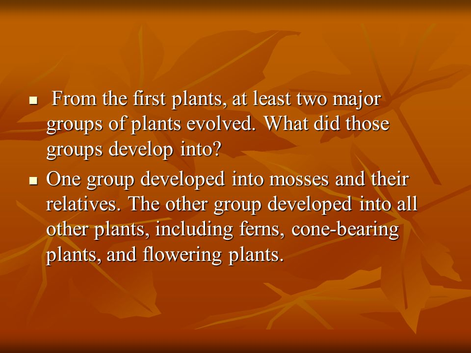 From the first plants, at least two major groups of plants evolved
