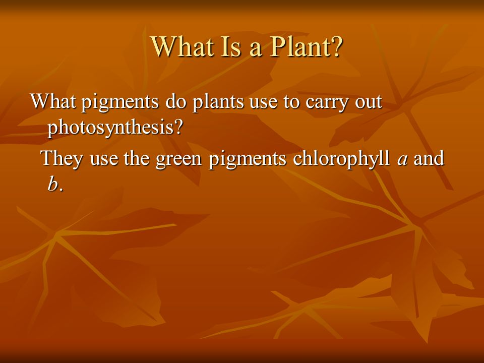 What Is a Plant. What pigments do plants use to carry out photosynthesis.