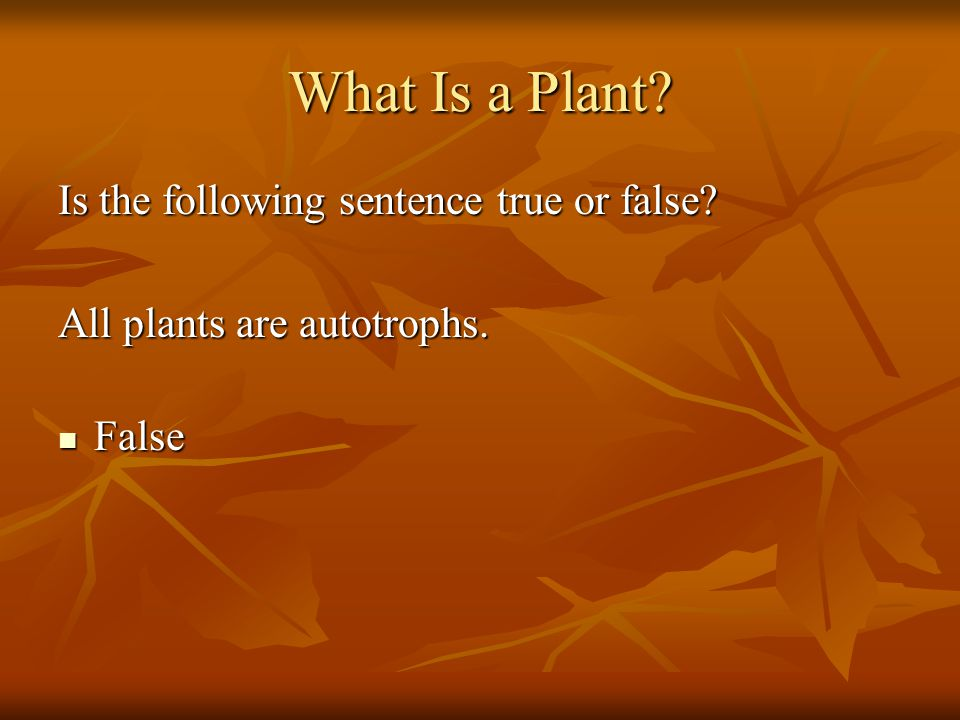 What Is a Plant Is the following sentence true or false