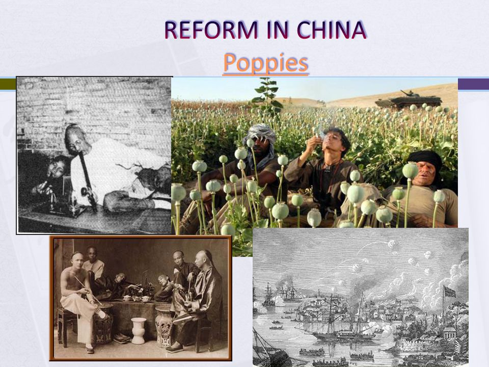 REFORM IN CHINA Poppies