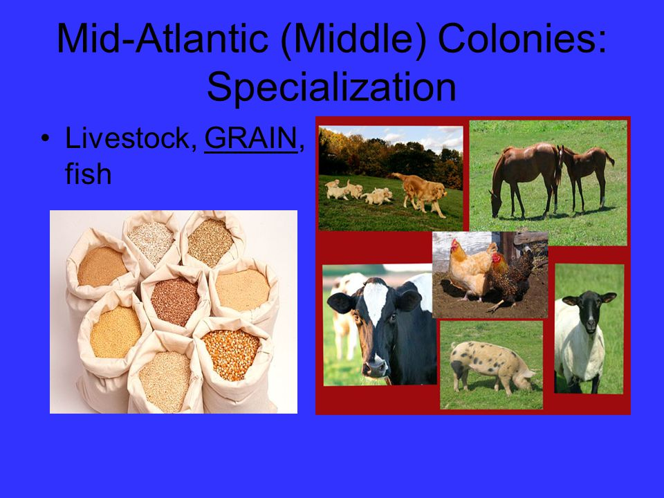 Mid-Atlantic (Middle) Colonies: Specialization