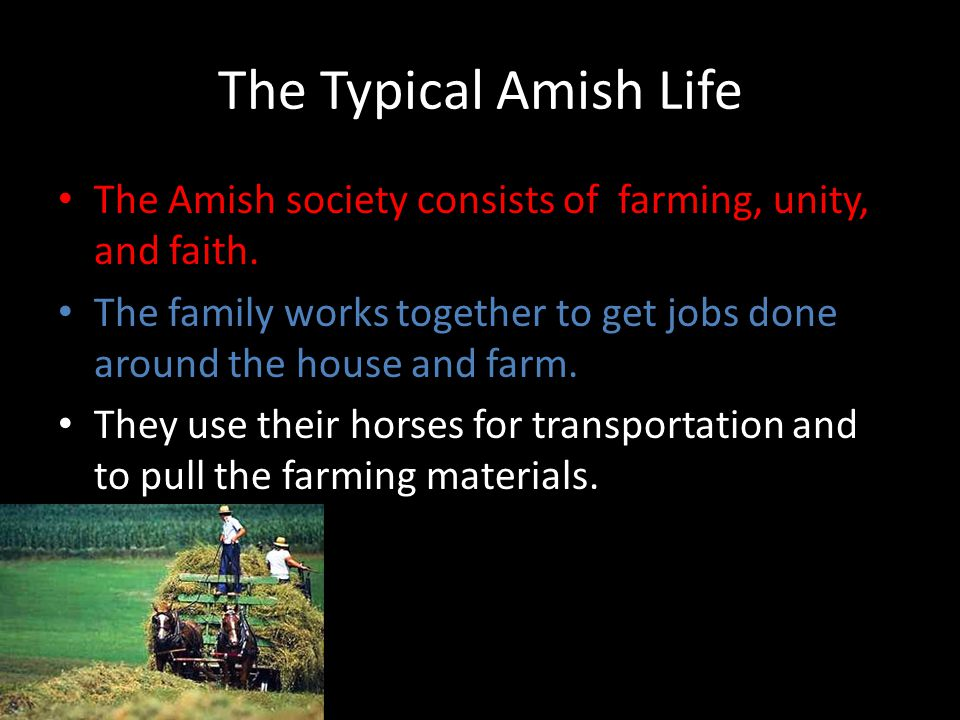 The Typical Amish Life The Amish society consists of farming, unity, and faith.
