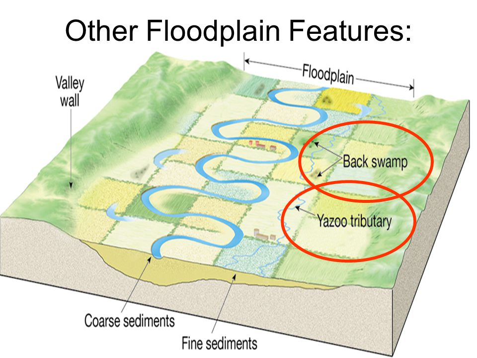 Other Floodplain Features: