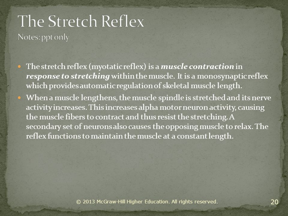 The Stretch Reflex Notes: ppt only