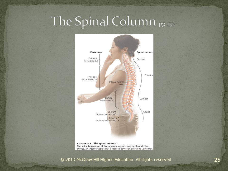 The Spinal Column pg © 2013 McGraw-Hill Higher Education. All rights reserved.