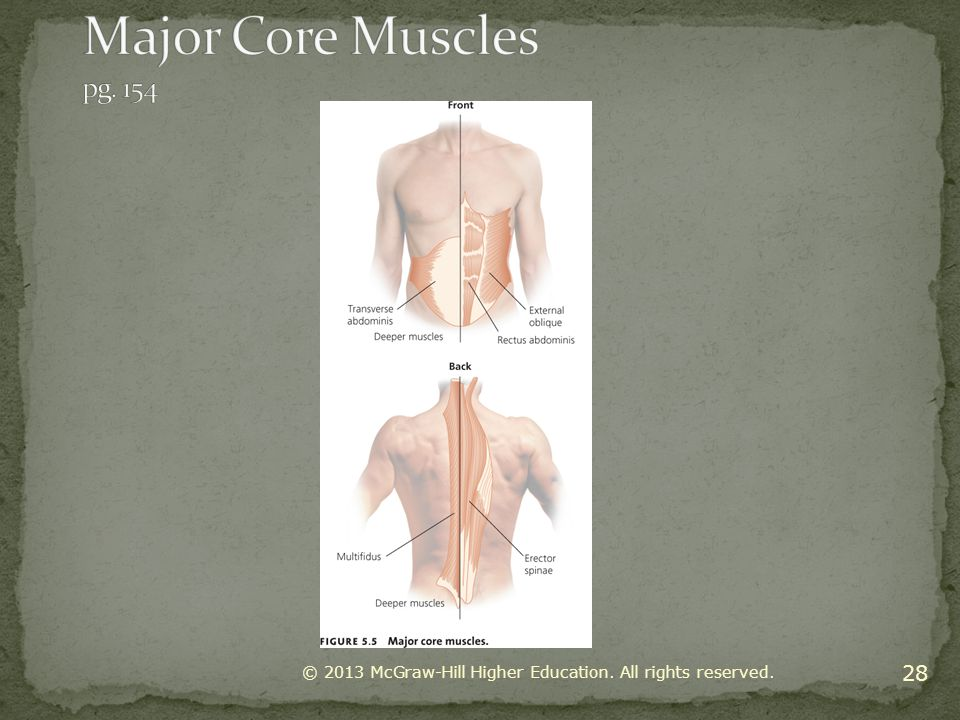 Major Core Muscles pg. 154 © 2013 McGraw-Hill Higher Education. All rights reserved.