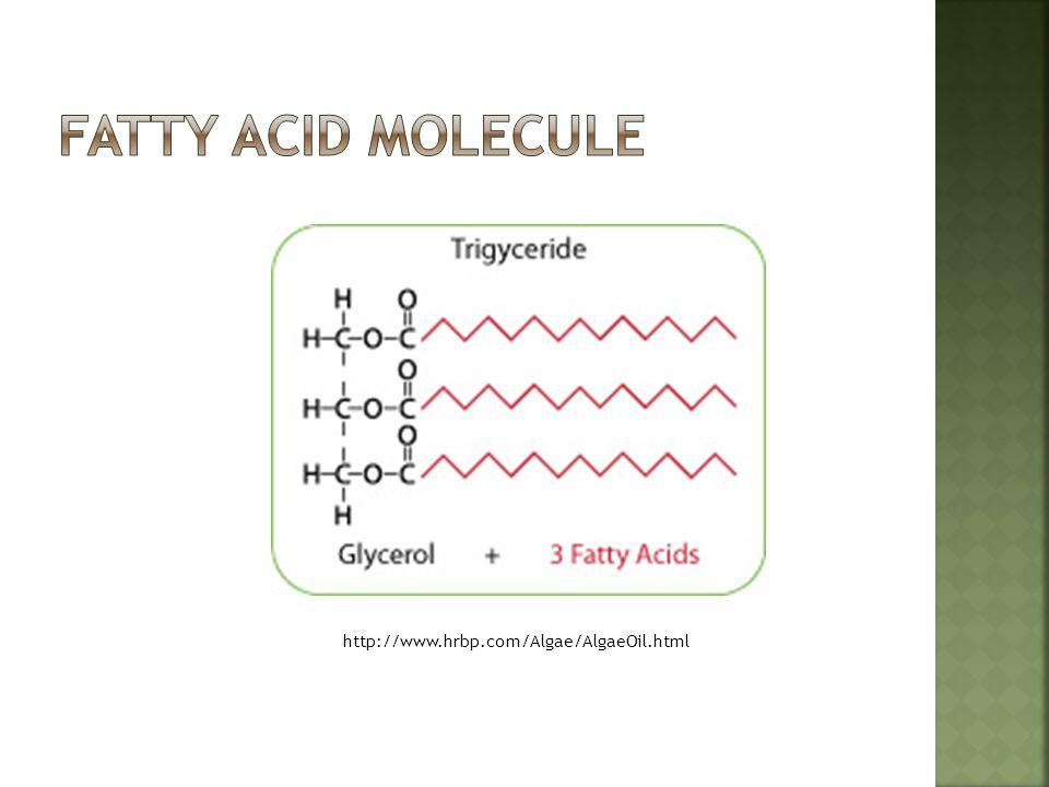 Fatty acid molecule http://www.hrbp.com/Algae/AlgaeOil.html