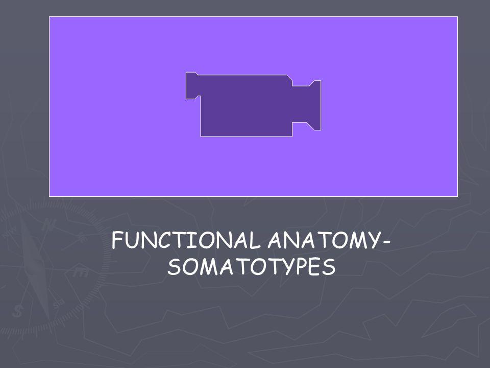 FUNCTIONAL ANATOMY- SOMATOTYPES