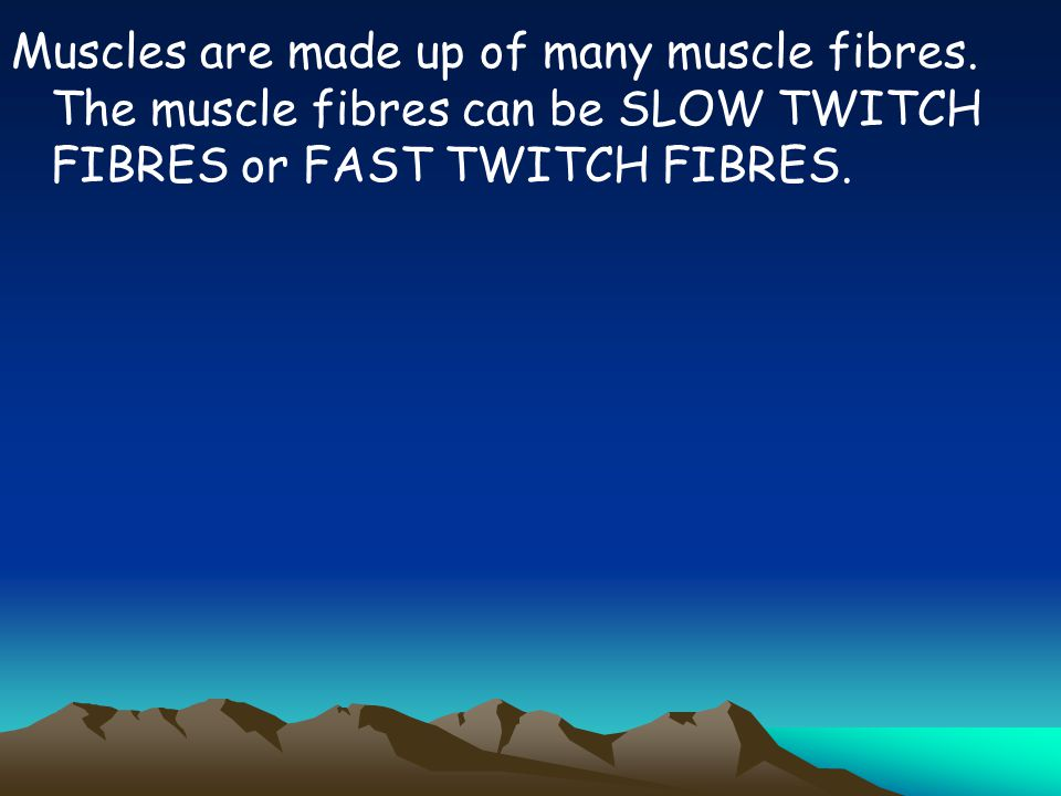 Muscles are made up of many muscle fibres