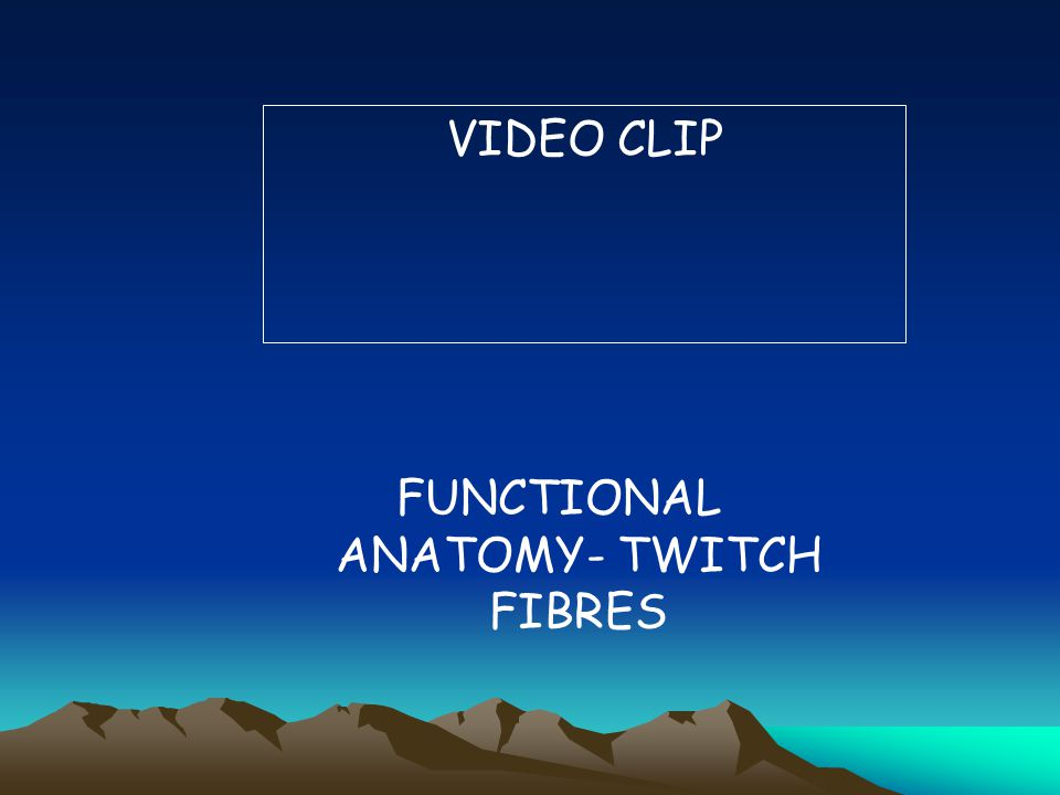 FUNCTIONAL ANATOMY- TWITCH FIBRES