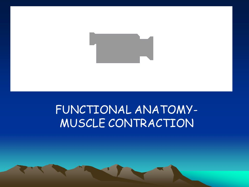 FUNCTIONAL ANATOMY- MUSCLE CONTRACTION