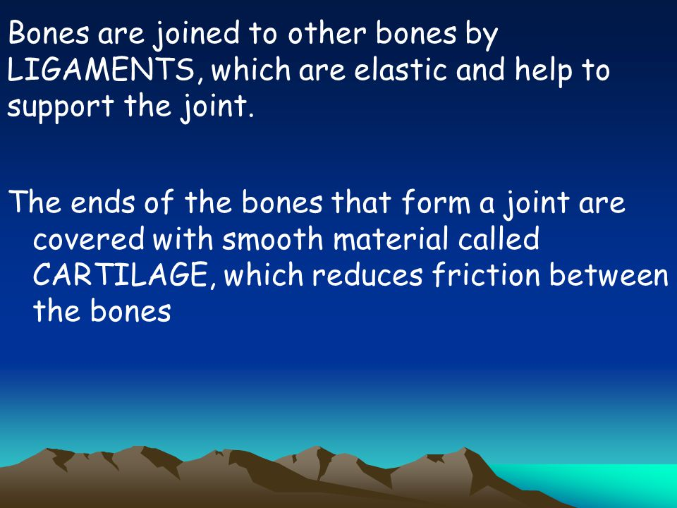 Bones are joined to other bones by LIGAMENTS, which are elastic and help to support the joint.