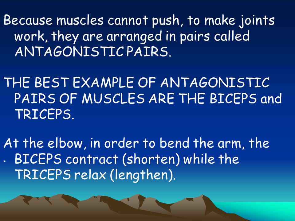 Because muscles cannot push, to make joints work, they are arranged in pairs called ANTAGONISTIC PAIRS.