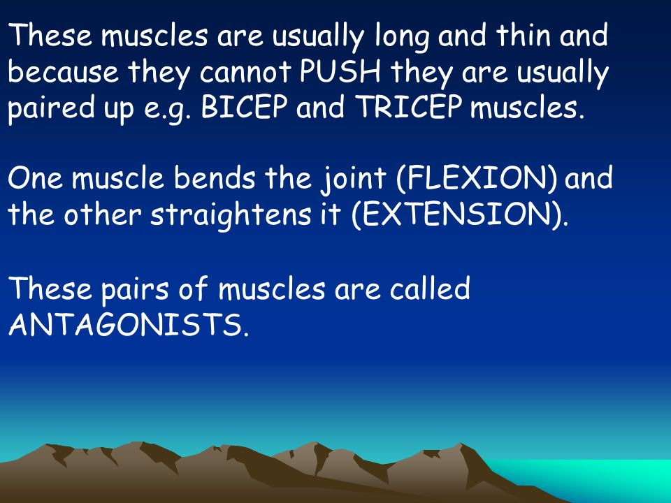 These muscles are usually long and thin and because they cannot PUSH they are usually paired up e.g. BICEP and TRICEP muscles.