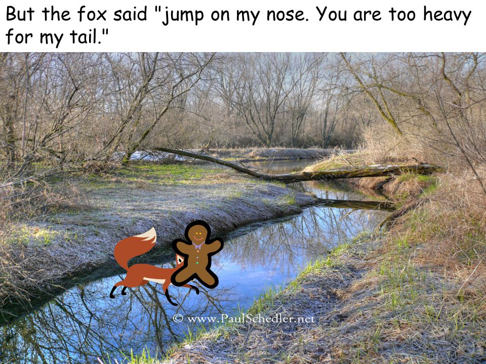 But the fox said jump on my nose. You are too heavy for my tail.