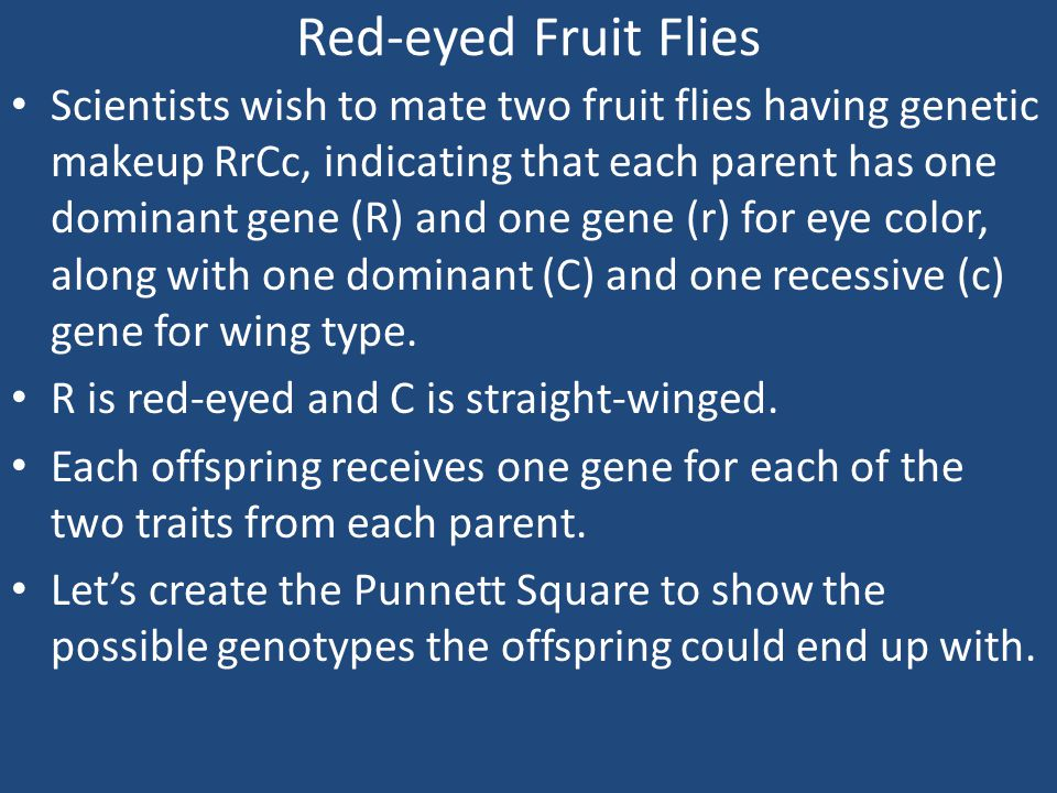 Red-eyed Fruit Flies
