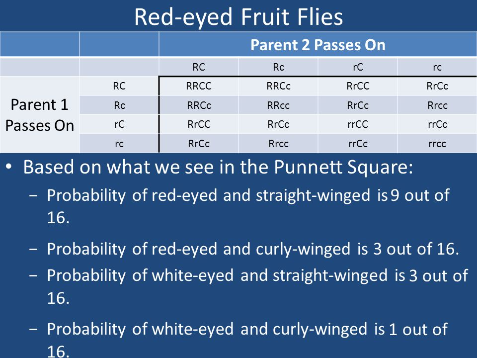Red-eyed Fruit Flies Based on what we see in the Punnett Square:
