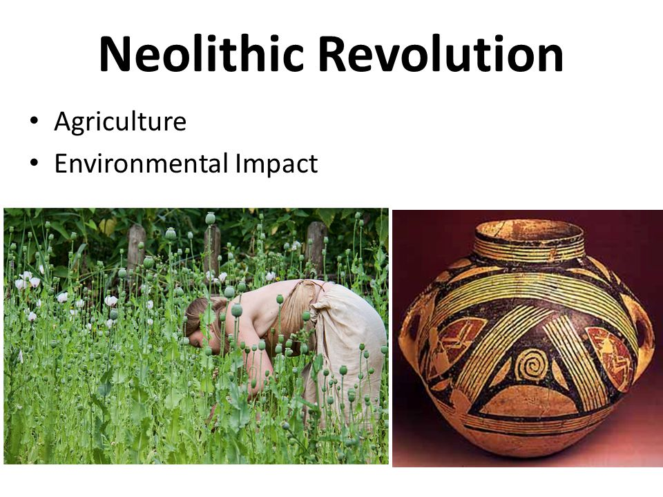 Neolithic Revolution Agriculture Environmental Impact