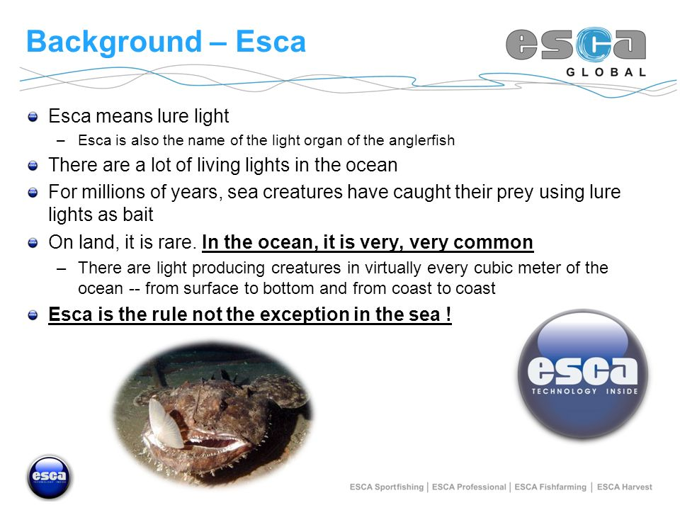 Background – Esca Esca means lure light