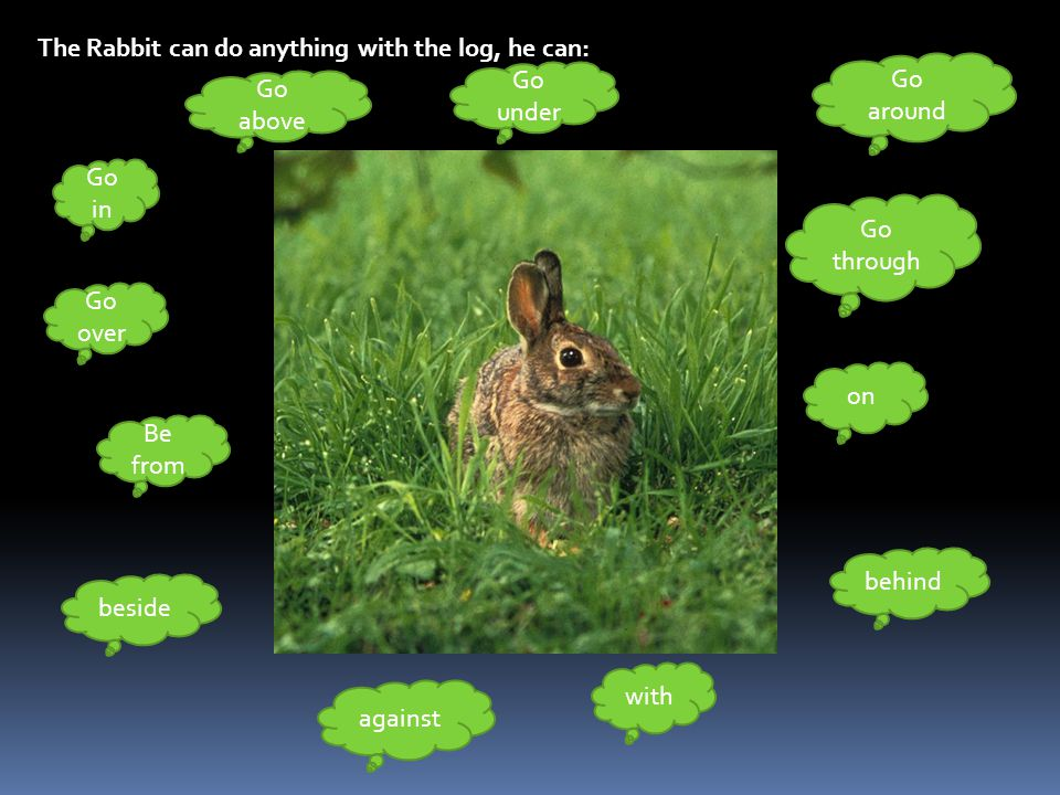 The Rabbit can do anything with the log, he can:
