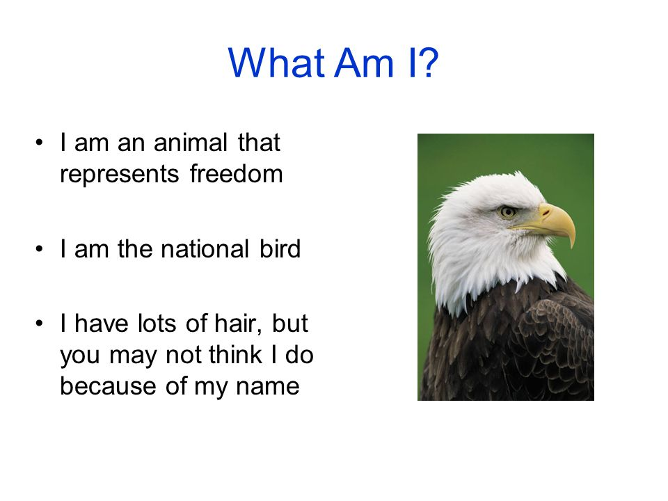 What Am I I am an animal that represents freedom