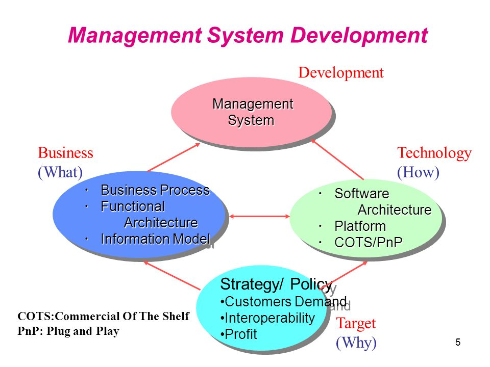 Management System Development