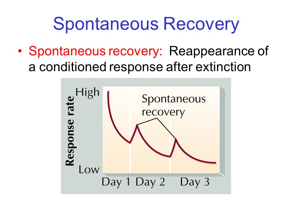 Spontaneous Recovery Spontaneous recovery: Reappearance of a conditioned response after extinction.