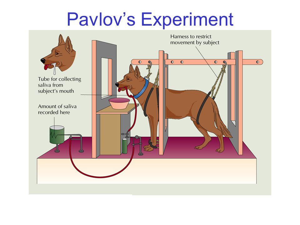 Pavlov's Experiment © 2004 John Wiley & Sons, Inc.