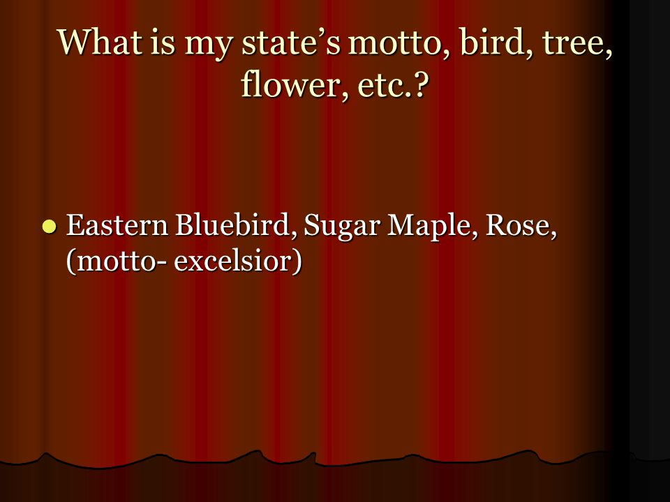 What is my state's motto, bird, tree, flower, etc.