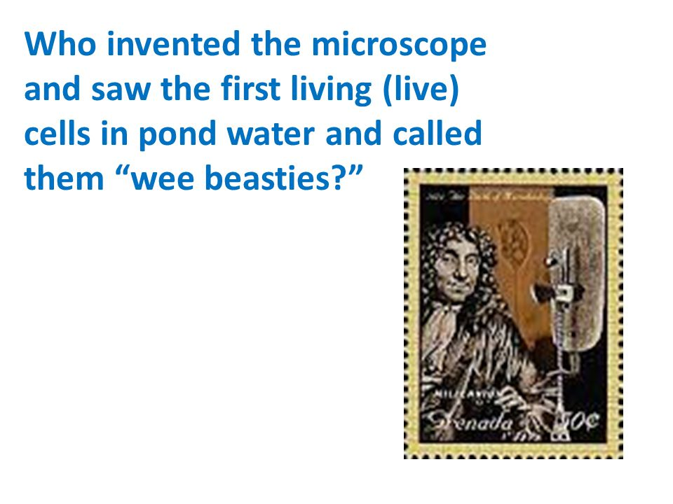 Who invented the microscope and saw the first living (live) cells in pond water and called them wee beasties