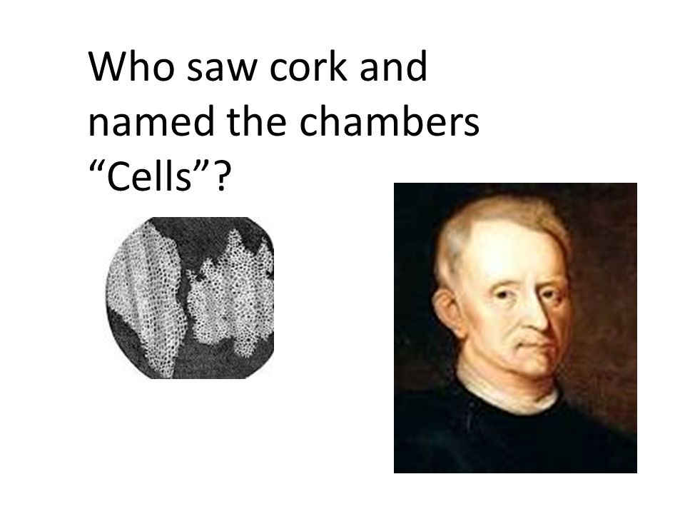 Who saw cork and named the chambers Cells
