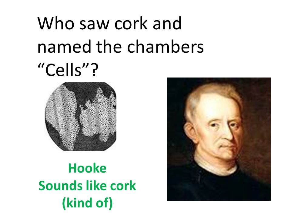 Sounds like cork (kind of)