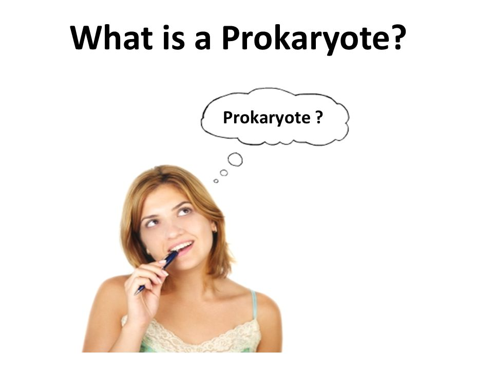 What is a Prokaryote Prokaryote