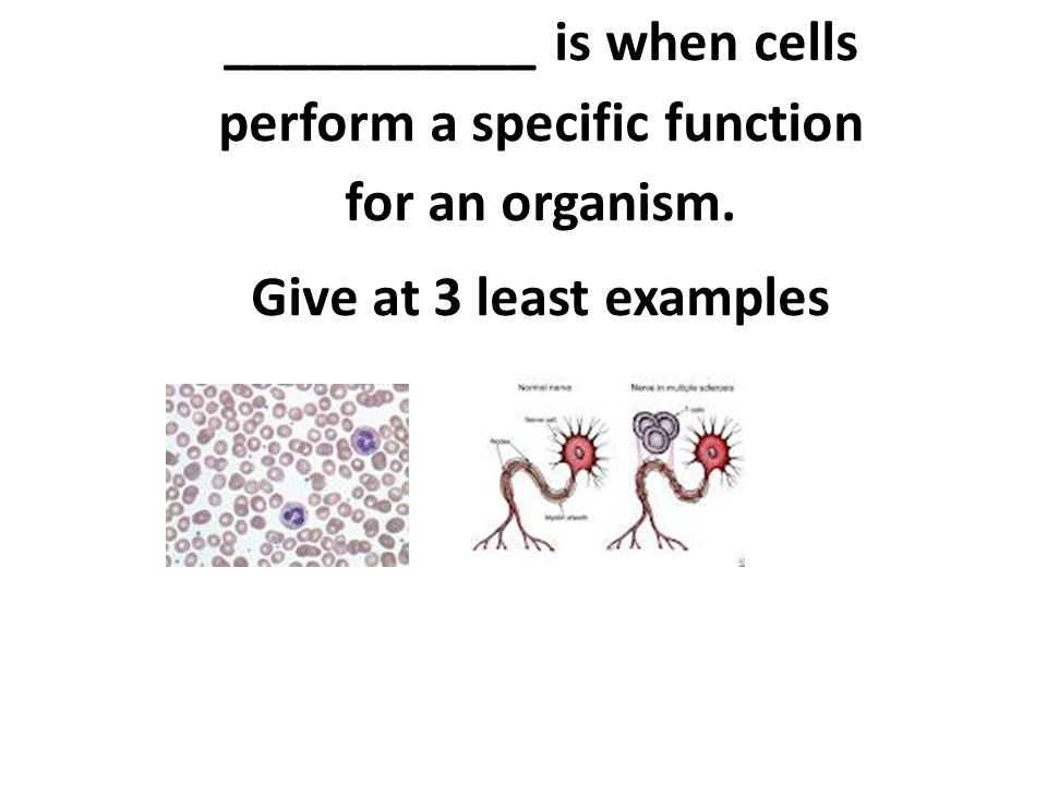 ___________ is when cells perform a specific function for an organism.