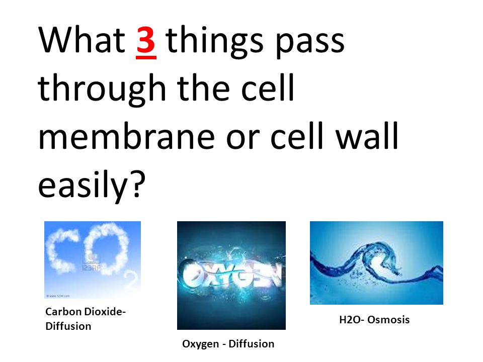 What 3 things pass through the cell membrane or cell wall easily