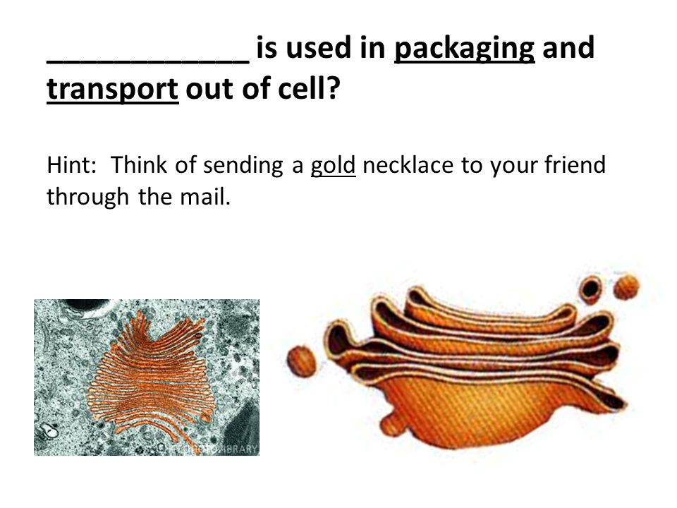 ____________ is used in packaging and transport out of cell