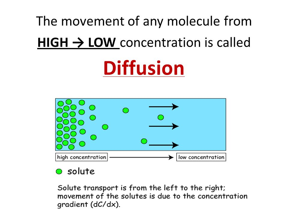 Diffusion The movement of any molecule from
