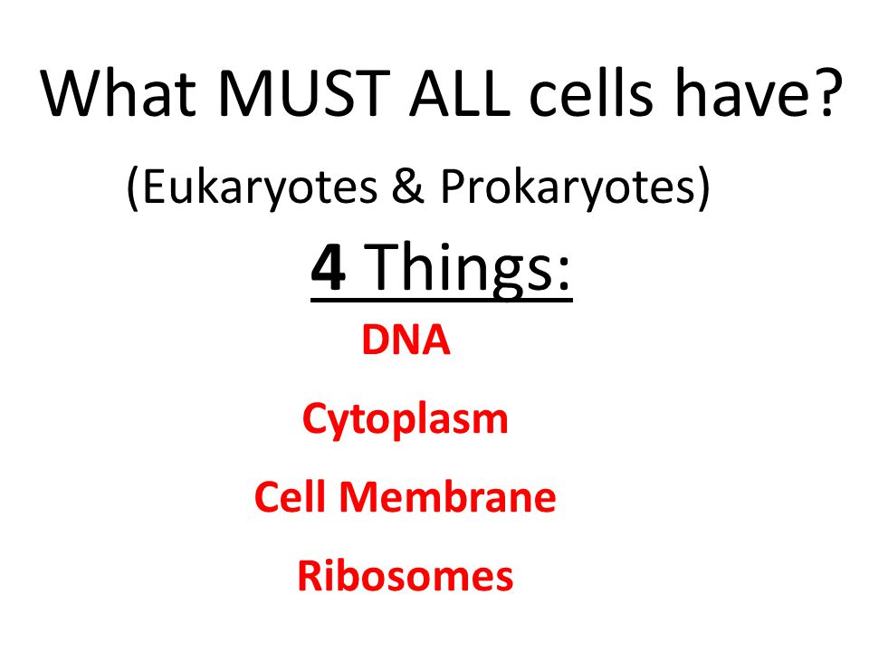 What MUST ALL cells have (Eukaryotes & Prokaryotes) 4 Things: