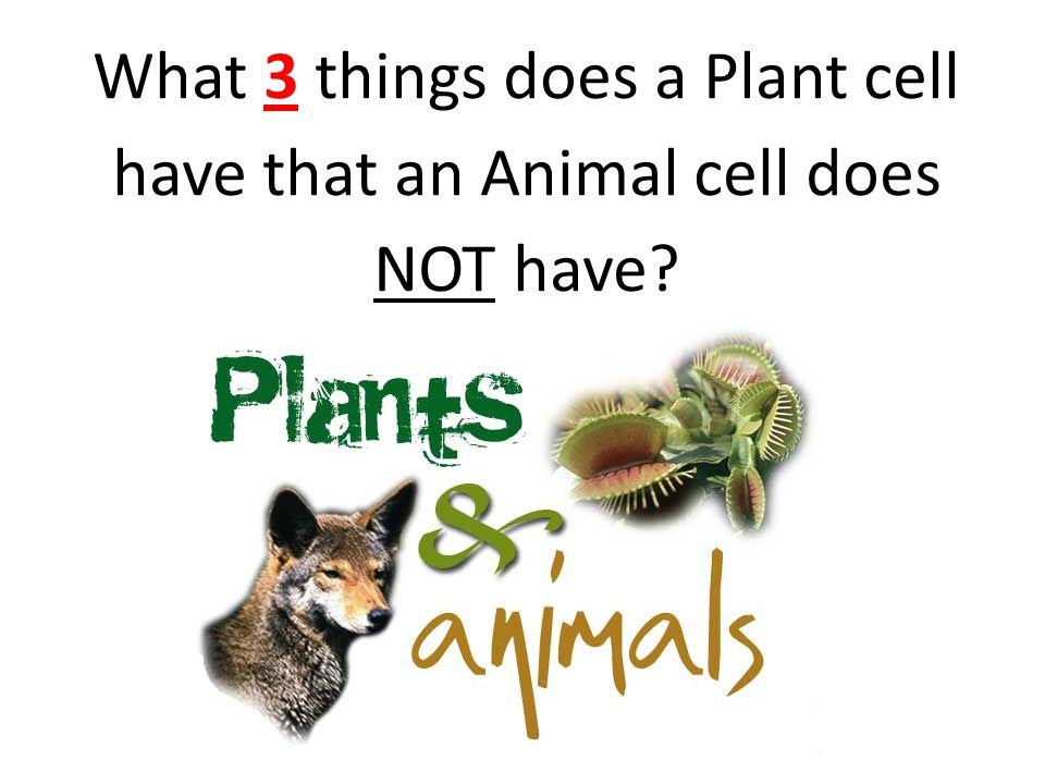 What 3 things does a Plant cell have that an Animal cell does NOT have