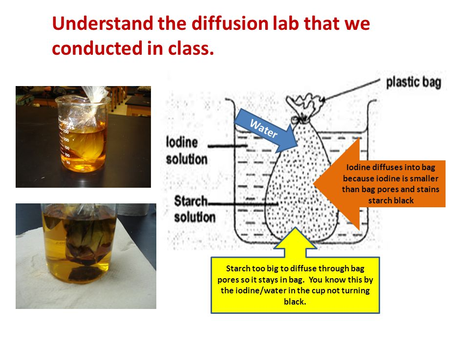 Understand the diffusion lab that we conducted in class.